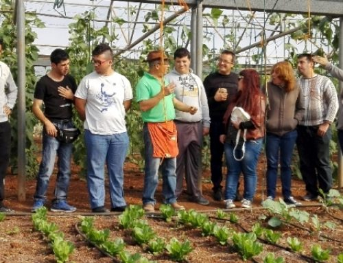 LYSOs Garden in Greece for Greeks with a handicap